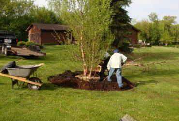 Urejanje dreves